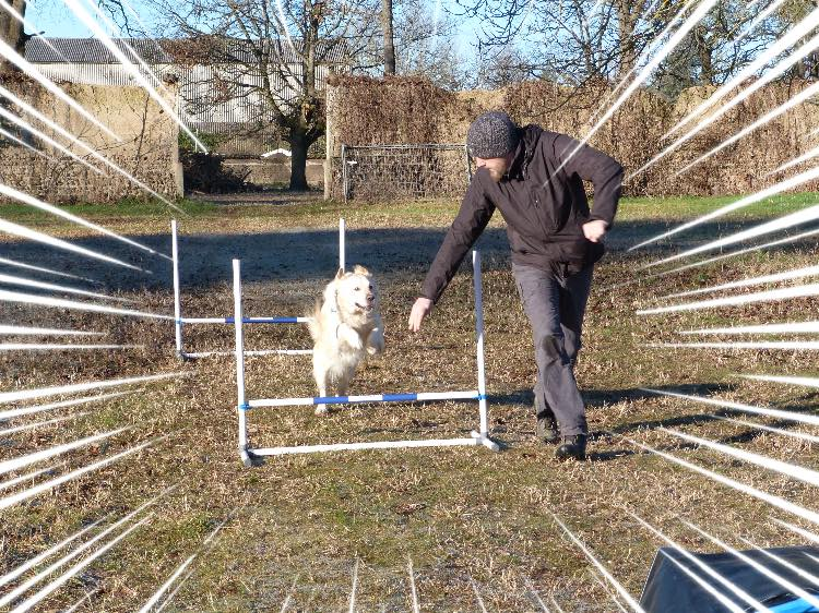 Stage agility - VIDEO et PHOTOS !